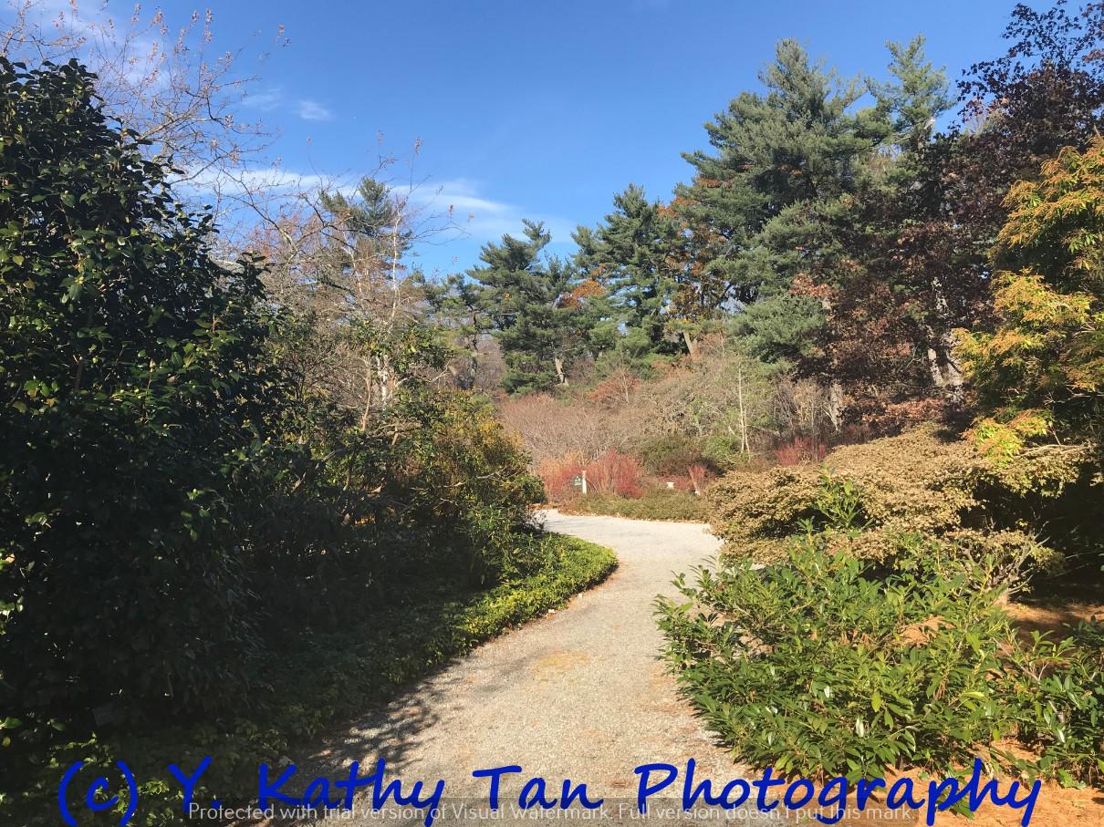 秋游Planting Field Arboretum_图1-9