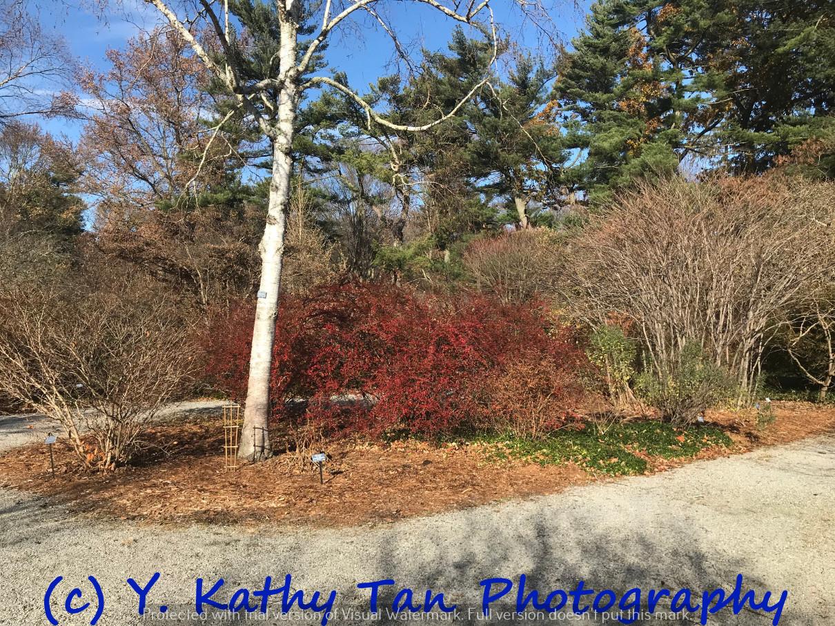 秋游Planting Field Arboretum_图1-10