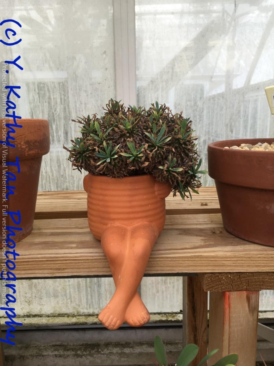 Planting Field Arboretum 的茶花盛宴_图1-3