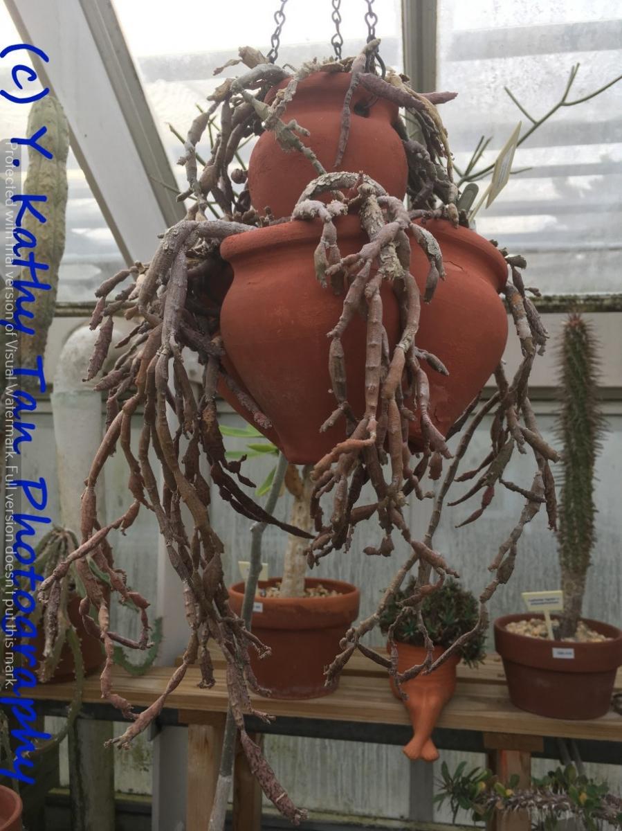Planting Field Arboretum 的茶花盛宴_图1-2