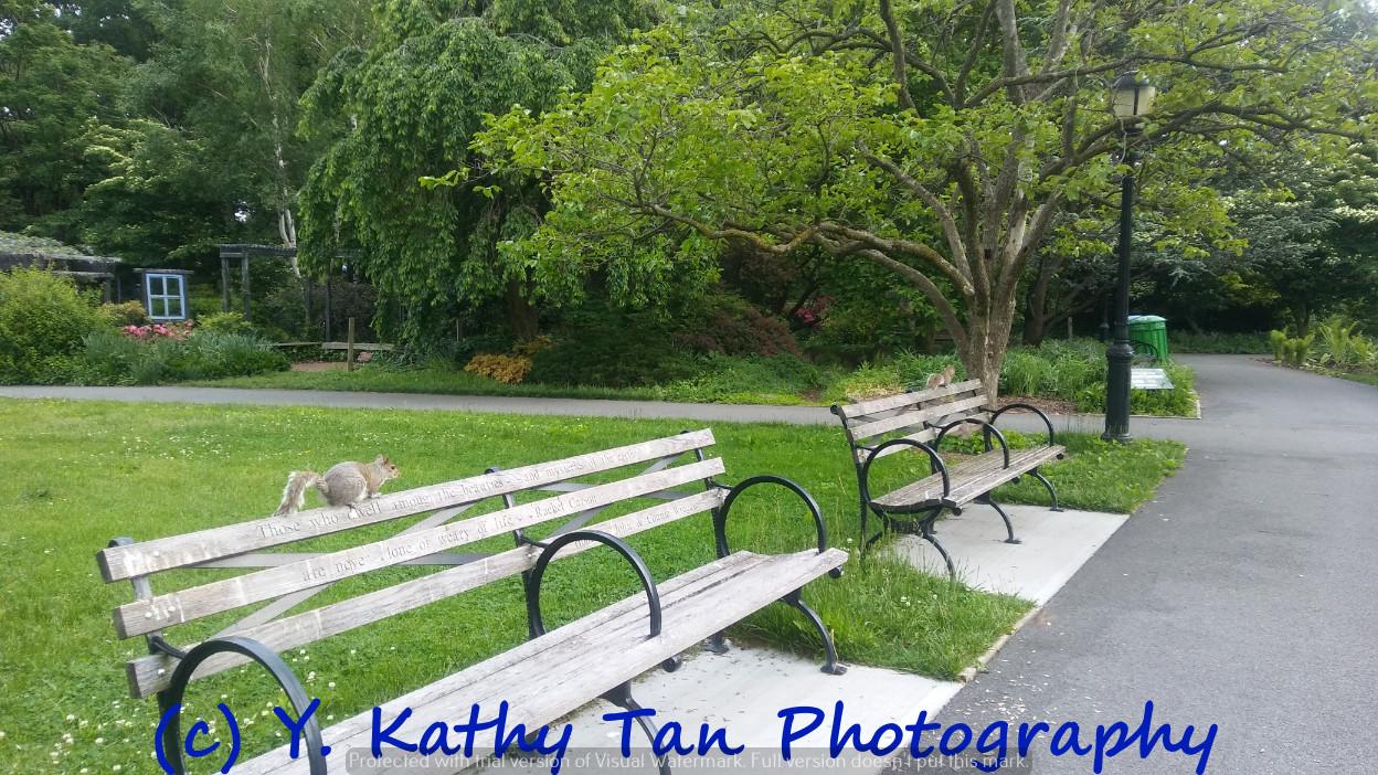 夏游Queens Botanical Garden_图1-2