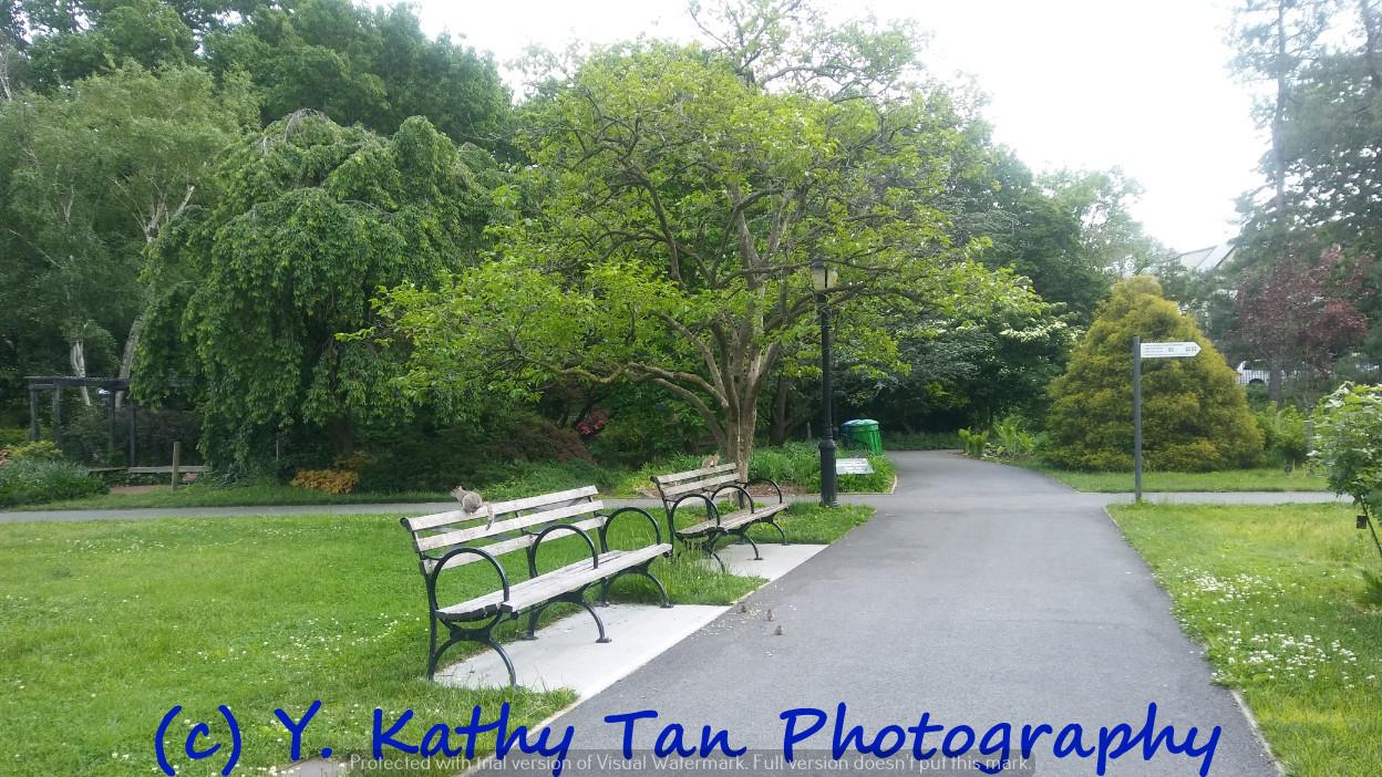 夏游Queens Botanical Garden_图1-1