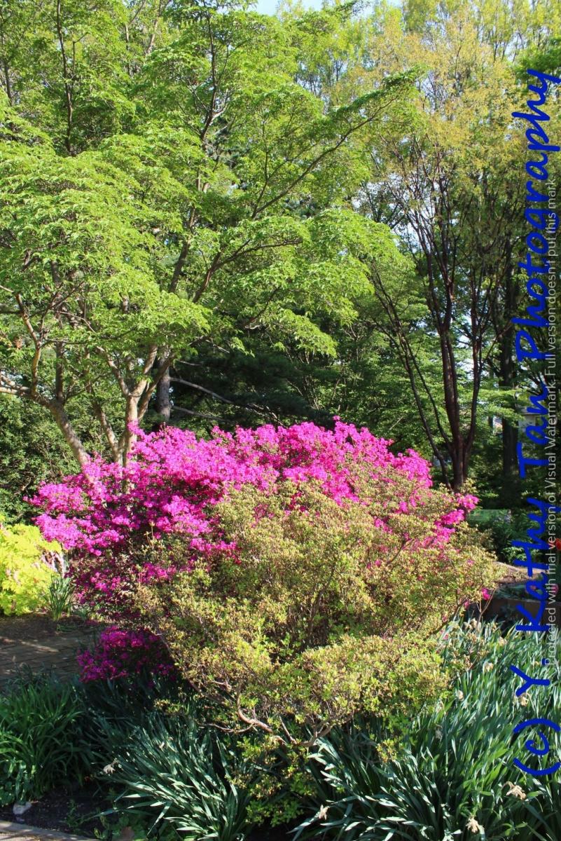 夏游Queens Botanical Garden_图1-4