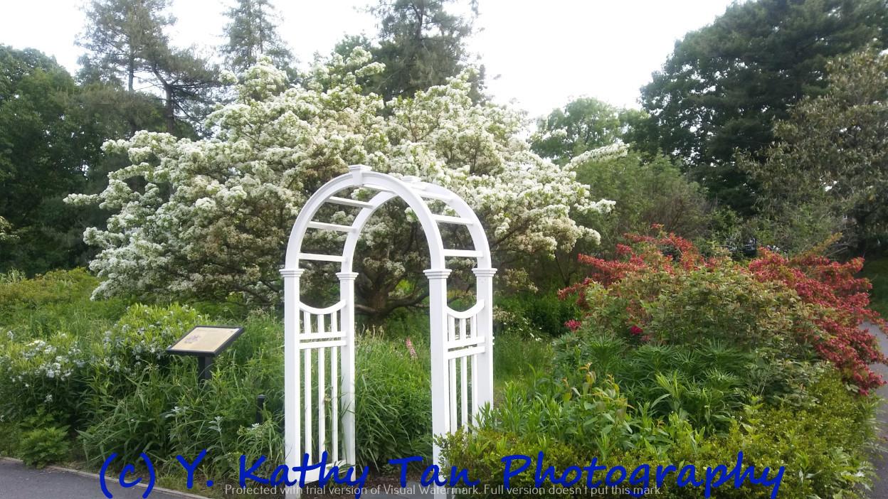夏游Queens Botanical Garden_图1-5
