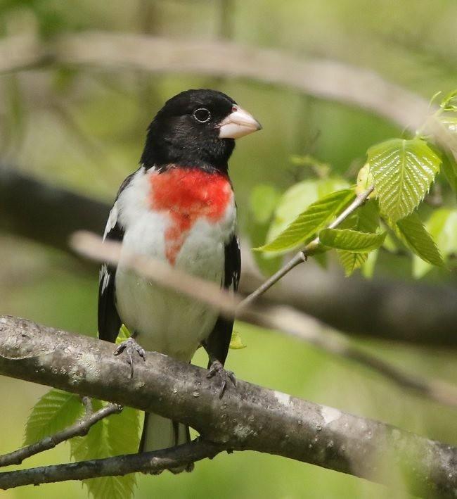 湿地小雀小鸟拍摄_图1-2