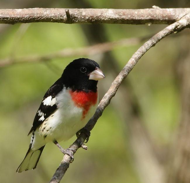 湿地小雀小鸟拍摄_图1-3