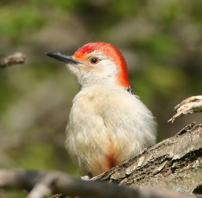 湿地小雀小鸟拍摄_图1-5