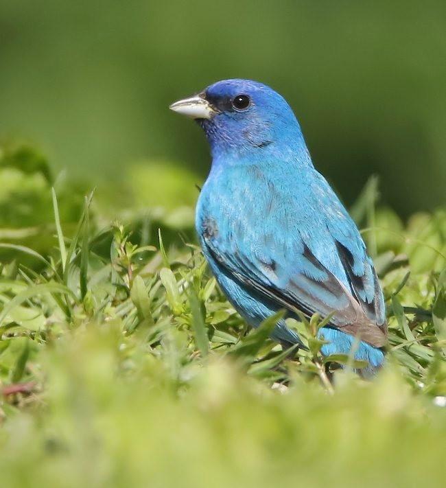 湿地小雀小鸟拍摄_图1-6
