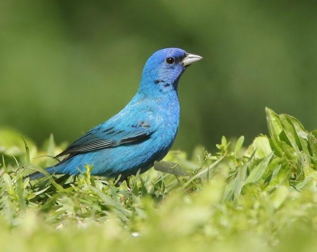 湿地小雀小鸟拍摄_图1-7