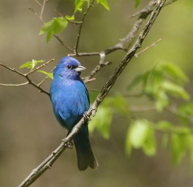 湿地小雀小鸟拍摄_图1-9