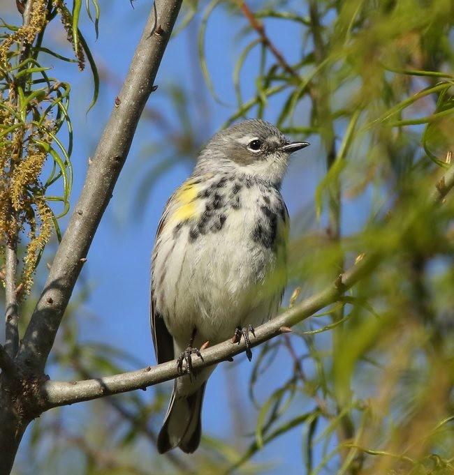湿地小雀小鸟拍摄_图1-10
