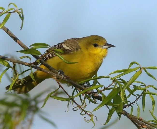 湿地小雀小鸟拍摄_图1-11