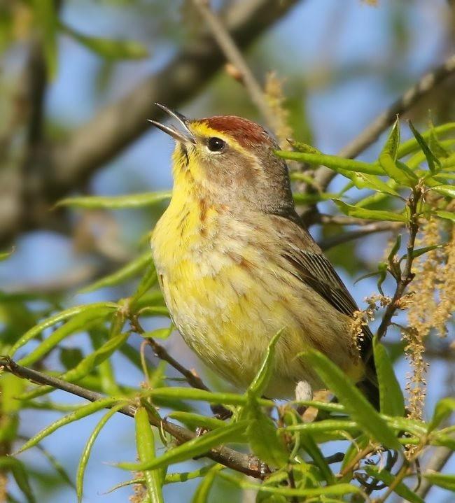 湿地小雀小鸟拍摄_图1-12