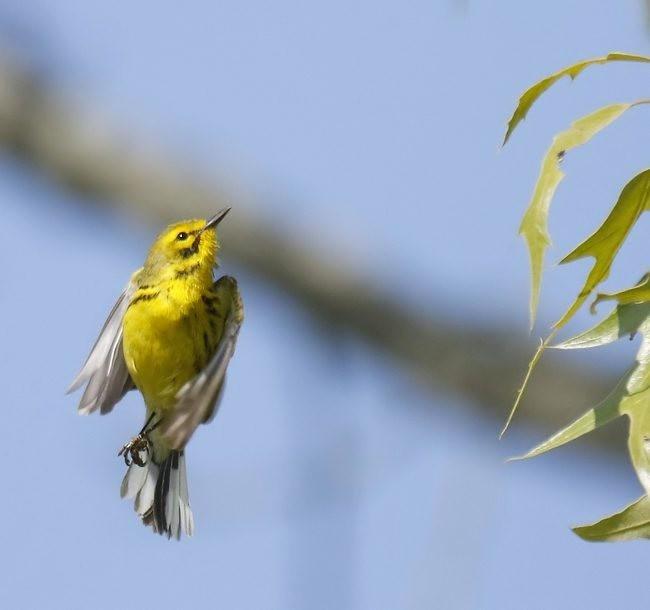 湿地小雀小鸟拍摄_图1-14