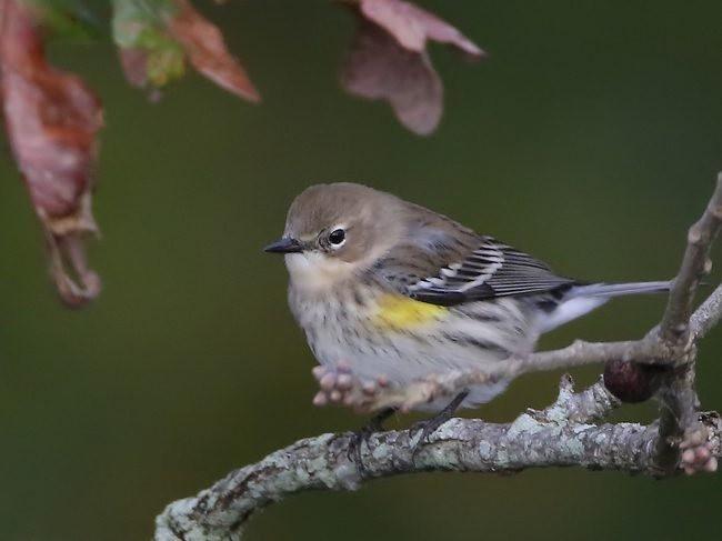 湿地小雀小鸟拍摄_图1-15