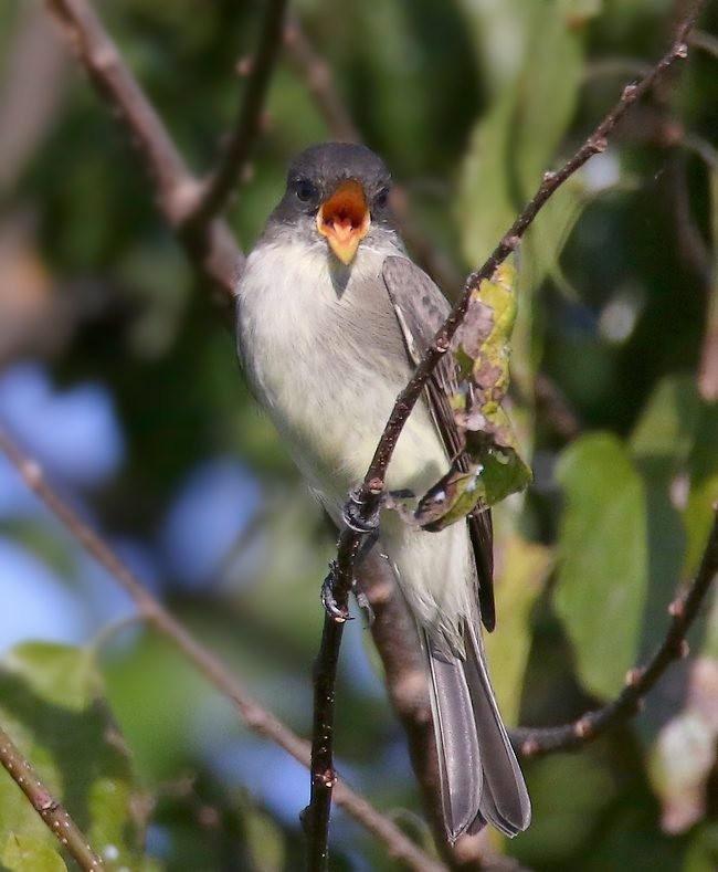 湿地小雀小鸟拍摄_图1-16