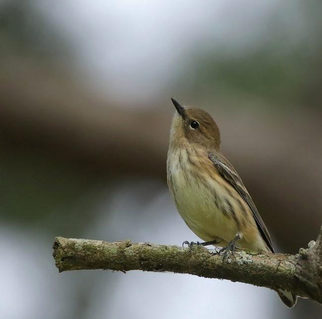 湿地小雀小鸟拍摄_图1-17