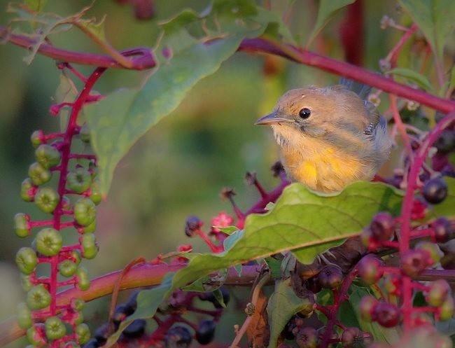 湿地小雀小鸟拍摄_图1-19