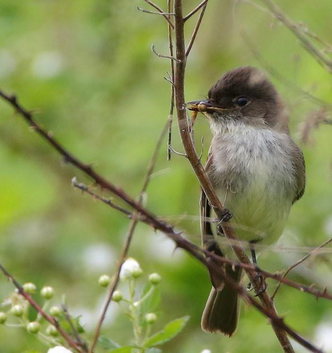 湿地小雀小鸟拍摄_图1-21