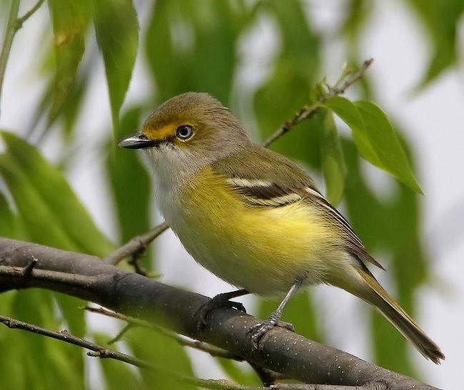 湿地小雀小鸟拍摄_图1-22