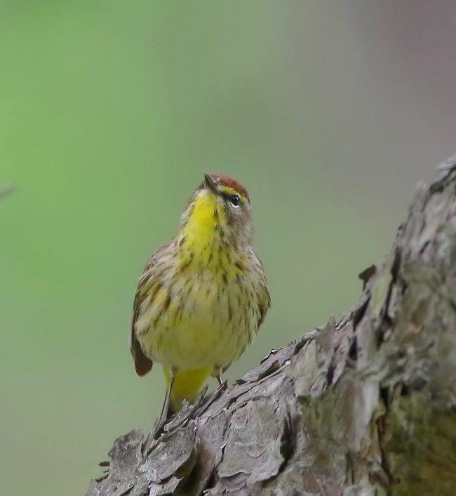 湿地小雀小鸟拍摄_图1-23