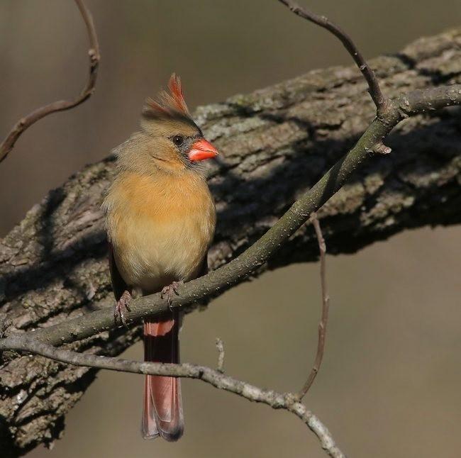 湿地小雀小鸟拍摄_图1-24