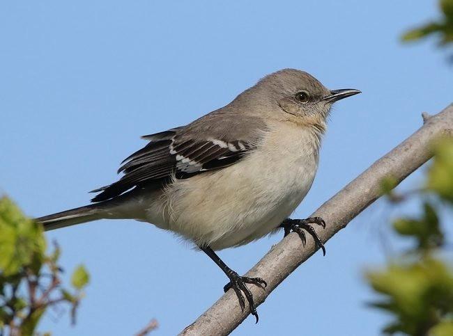 湿地小雀小鸟拍摄_图1-25