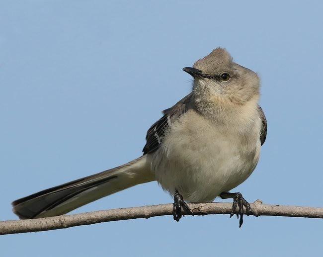 湿地小雀小鸟拍摄_图1-26