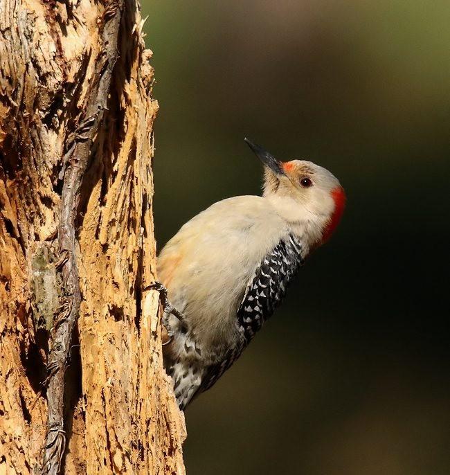 湿地小雀小鸟拍摄_图1-27