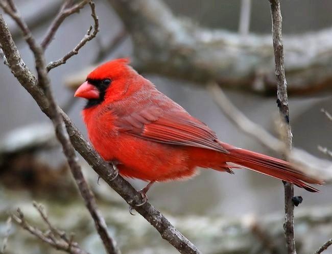 湿地小雀小鸟拍摄_图1-28