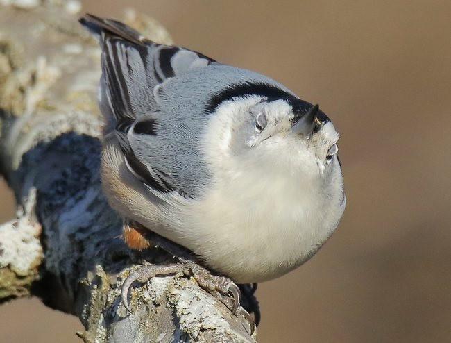 湿地小雀小鸟拍摄_图1-29
