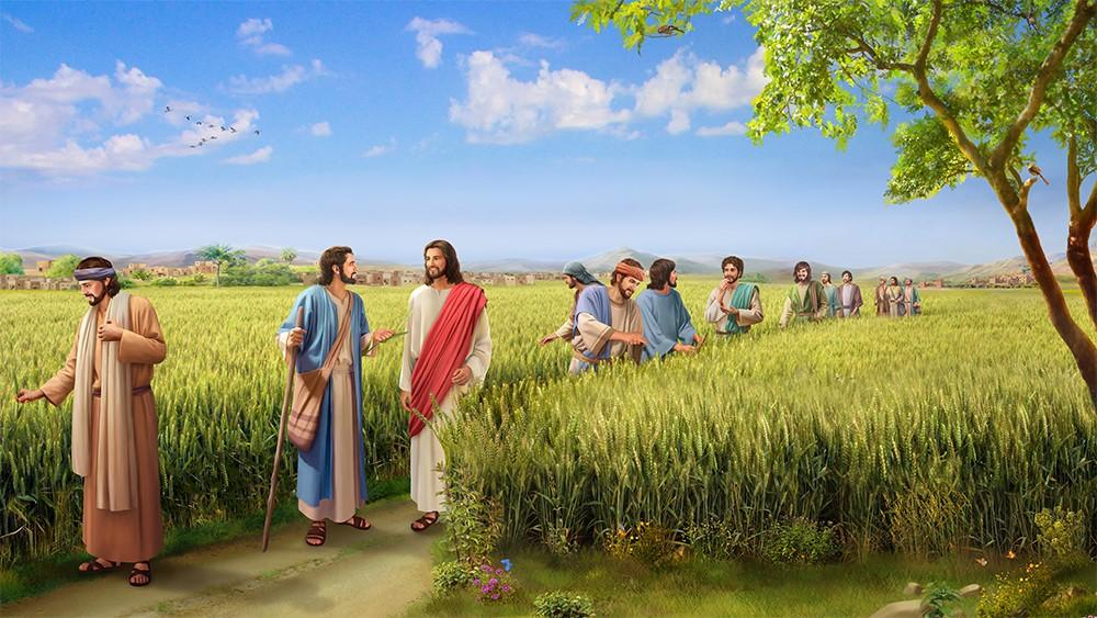 人子是安息日的主_图1-1