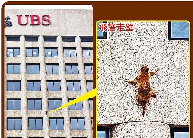 """高娓娓:引发美国热议的""""小浣熊""""惊险之旅_图1-1"""