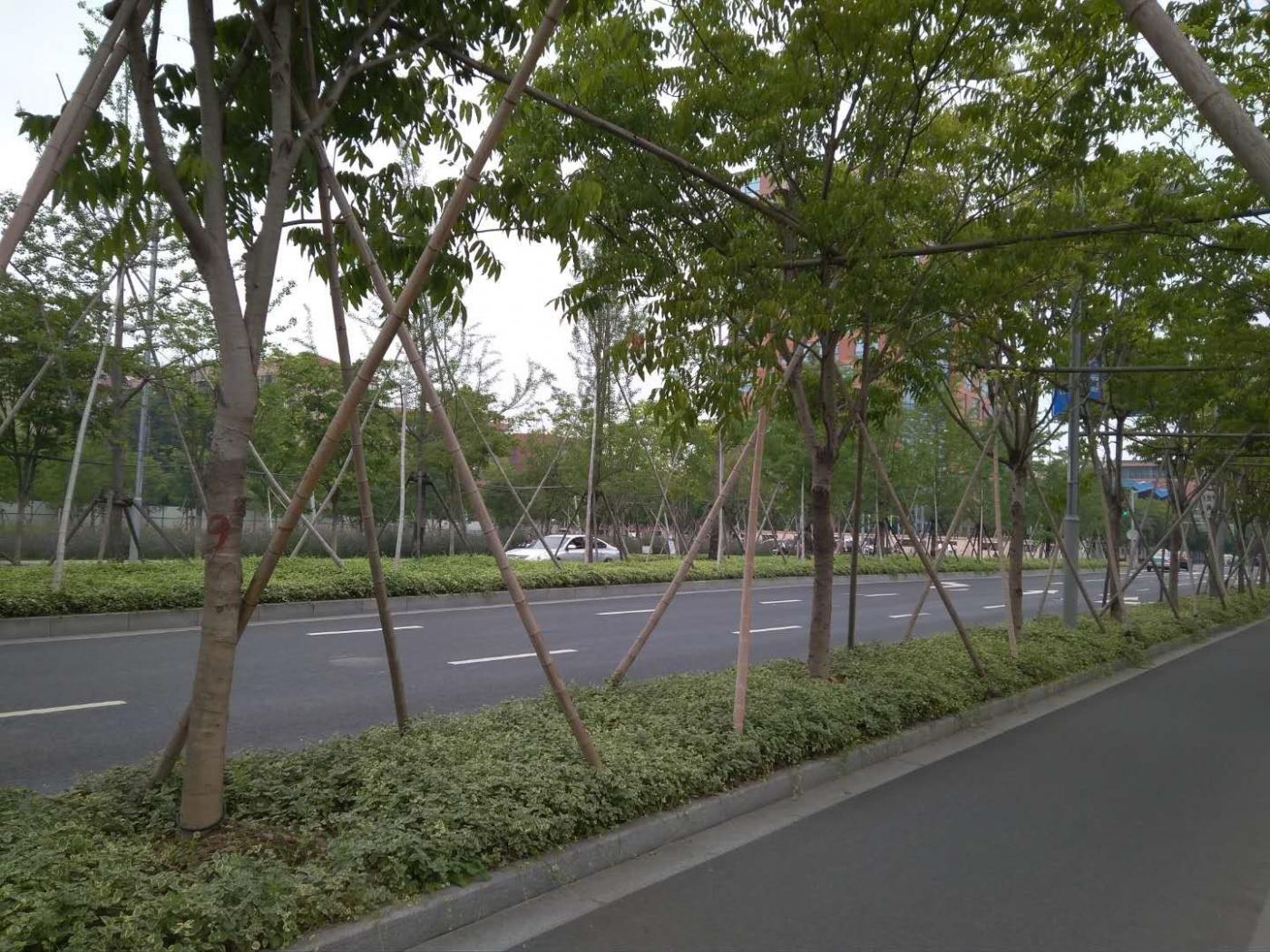 """市中心""""郊区化"""",漫步上海云锦路_图1-4"""