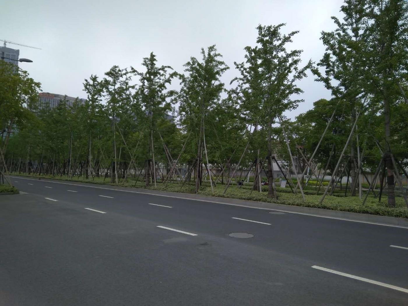 """市中心""""郊区化"""",漫步上海云锦路_图1-9"""