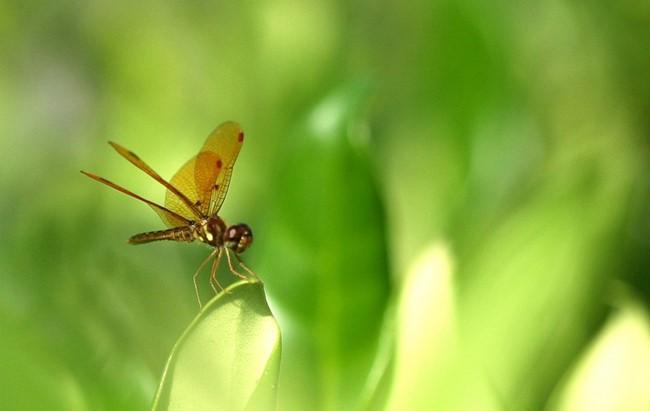 蜻蜓_图1-1