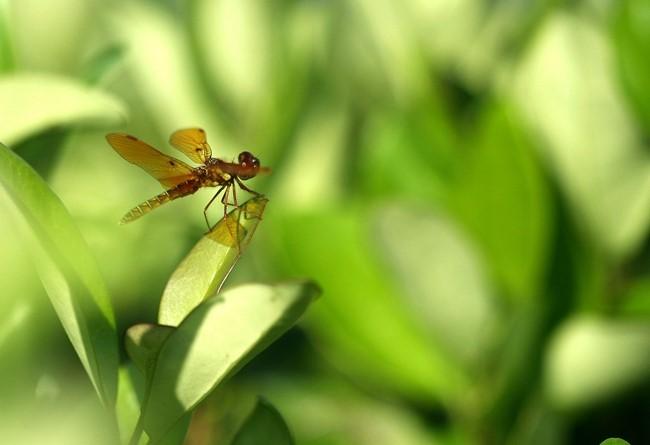 蜻蜓_图1-3