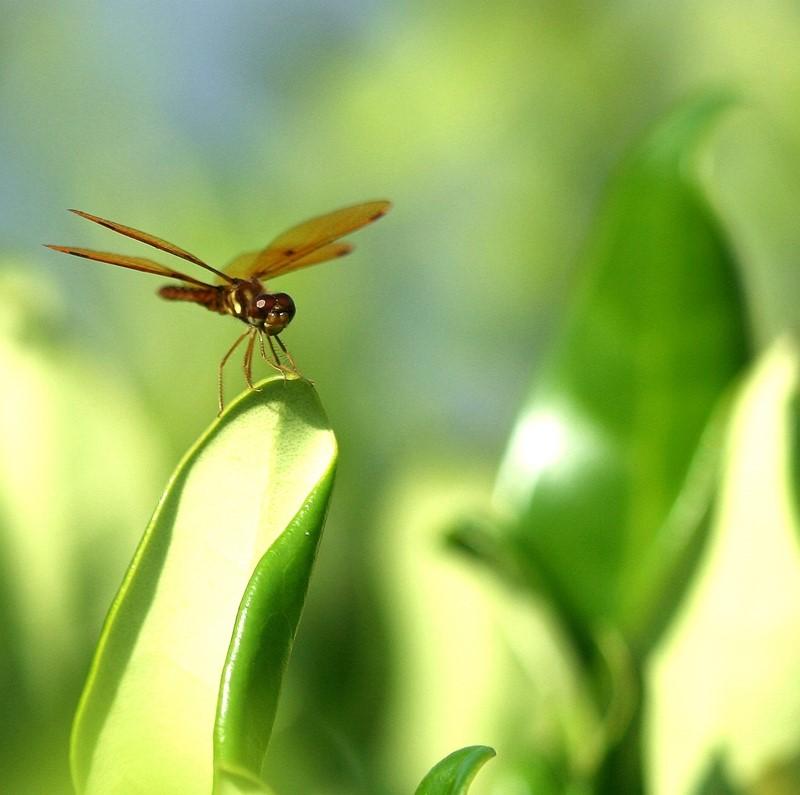 蜻蜓_图1-4