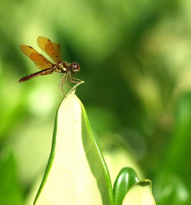 蜻蜓_图1-6