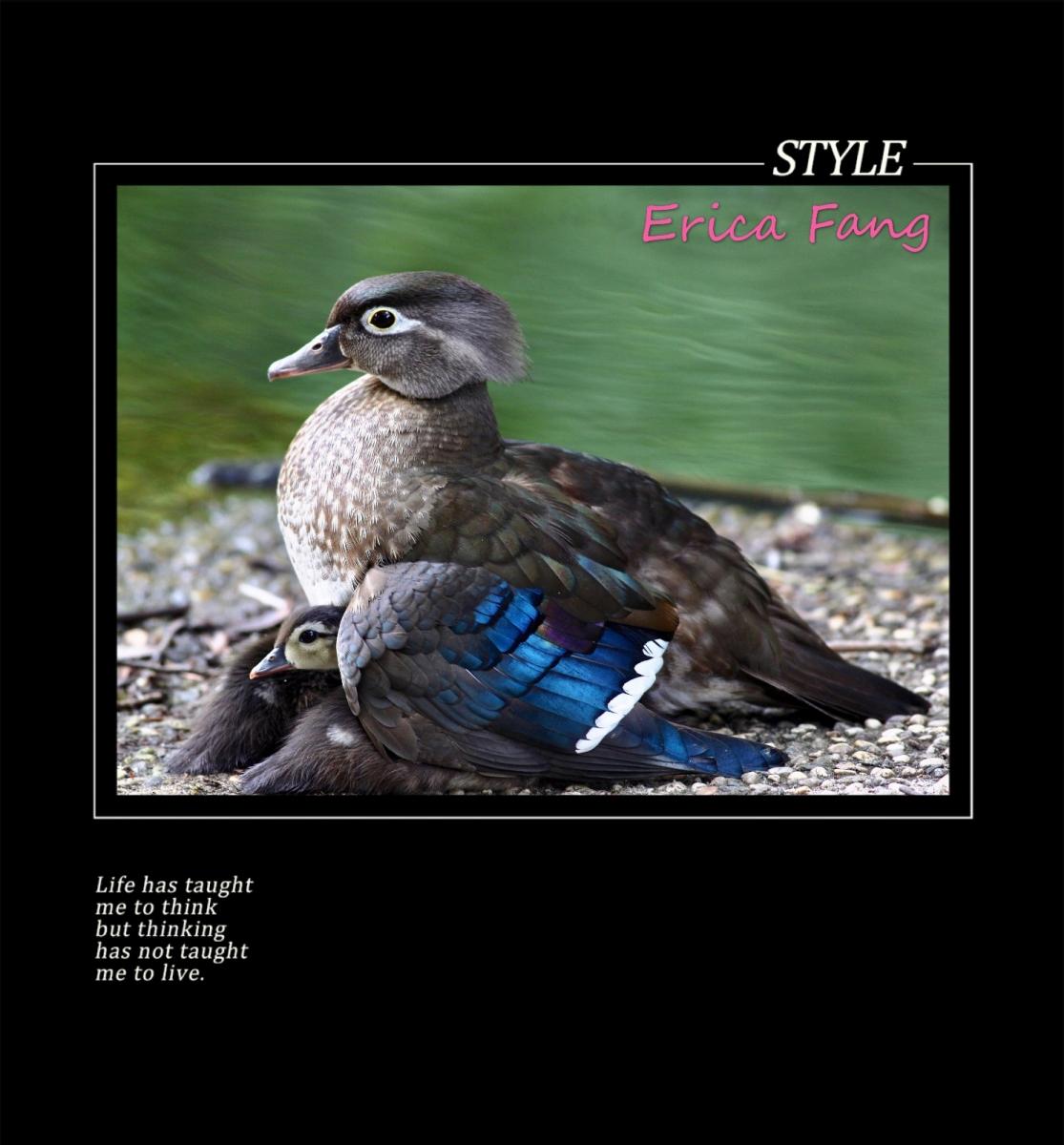 六只眼:鸟世界里温馨的母子图_图1-7