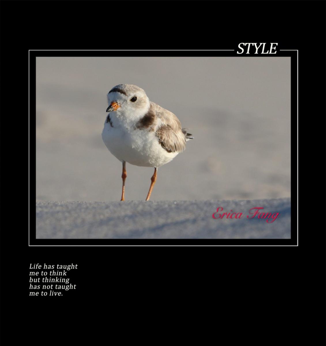 六只眼:鸟世界里温馨的母子图_图1-10