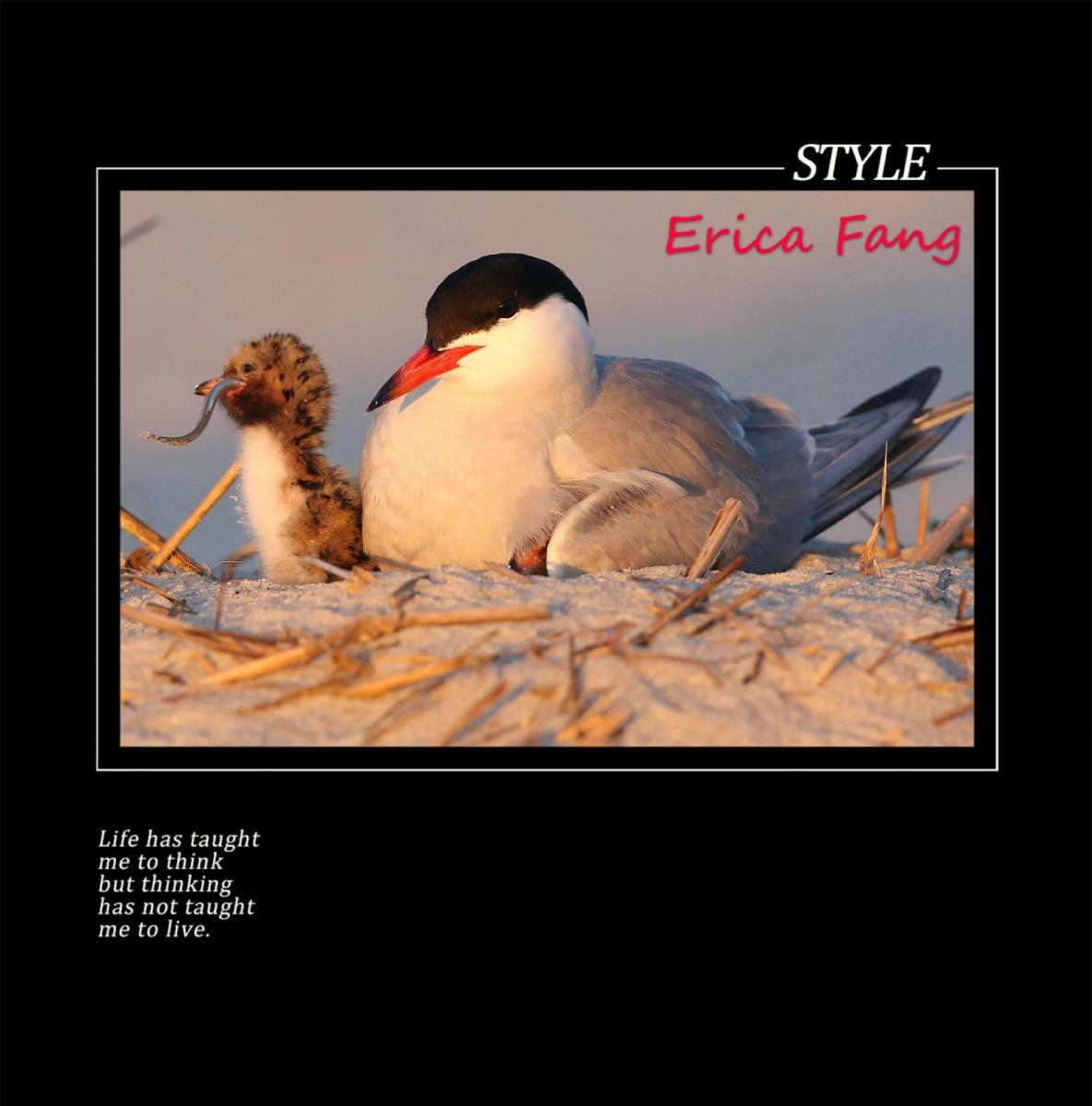 六只眼:鸟世界里温馨的母子图_图1-4