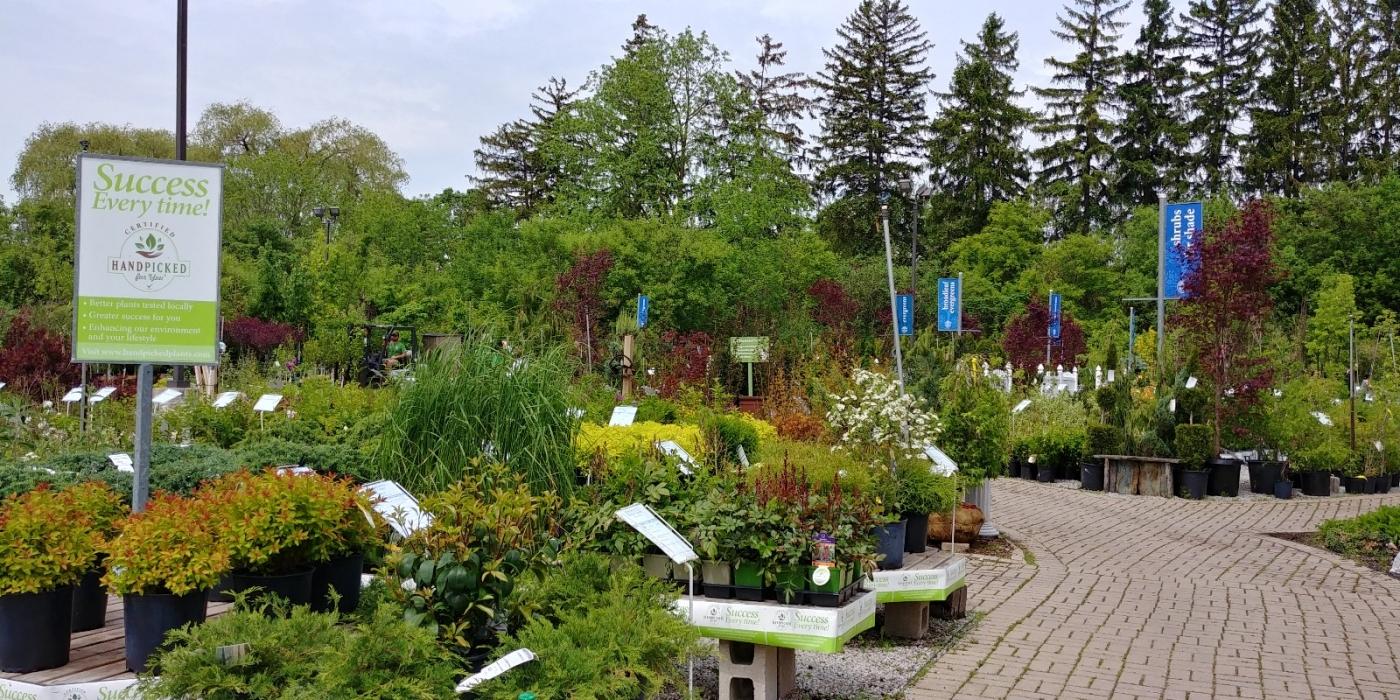 花圃_图1-8