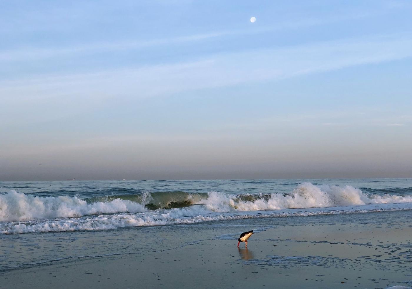 【田螺摄影】月未落日刚升的长滩画面_图1-5