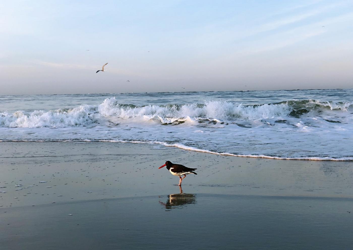 【田螺摄影】月未落日刚升的长滩画面_图1-8