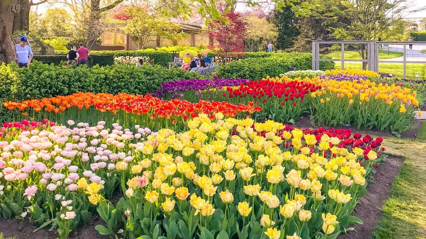 长木公园,赏花的心情_图1-14