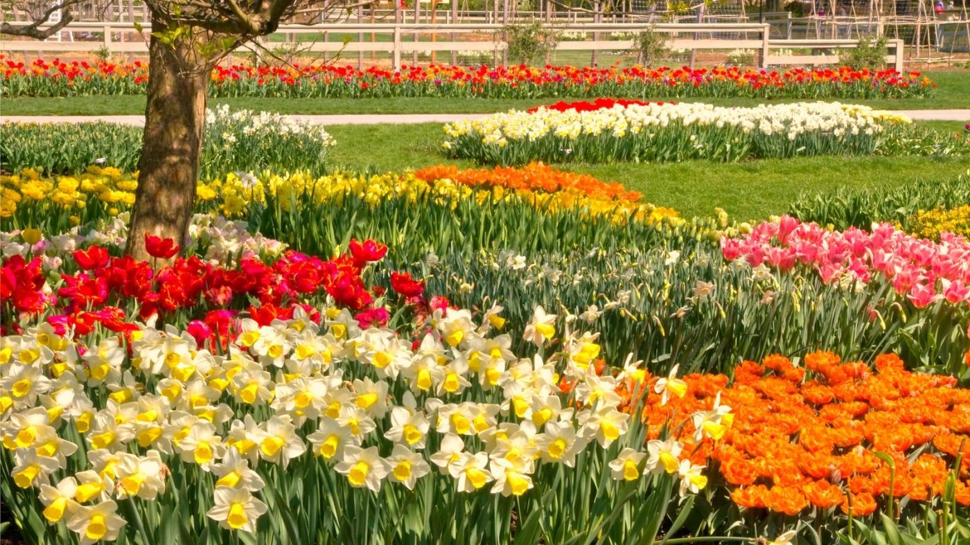 长木公园,赏花的心情_图1-15