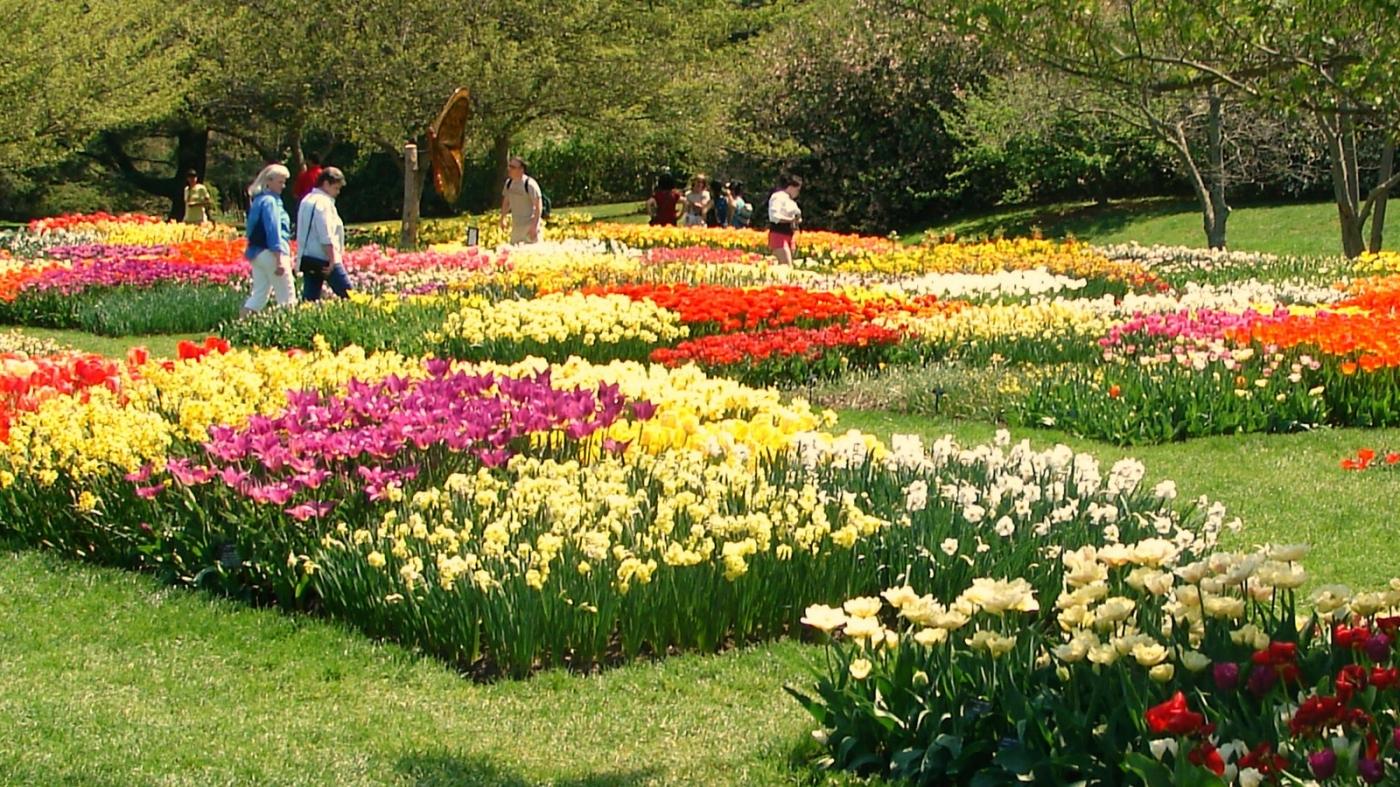 长木公园,赏花的心情_图1-13