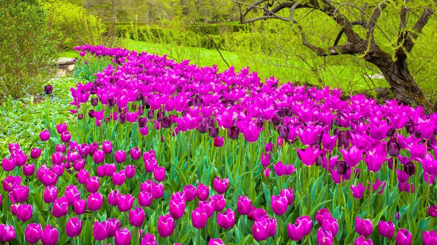 长木公园,赏花的心情_图1-12