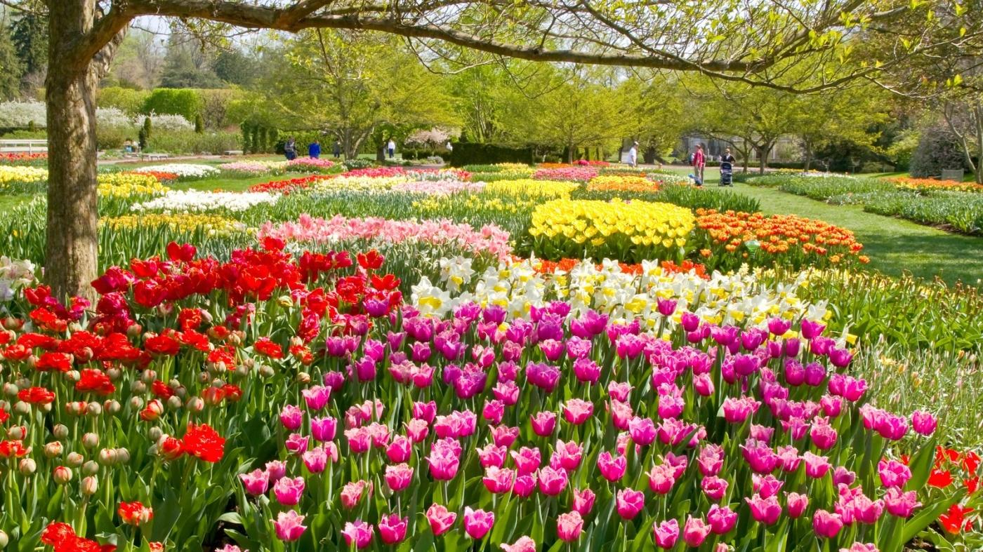 长木公园,赏花的心情_图1-11